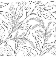 Amaranth plant pattern on white background vector