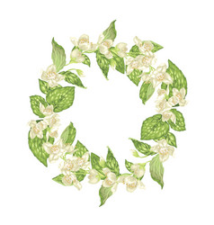 blooming wreath with jasmine flowers in graphic vector image