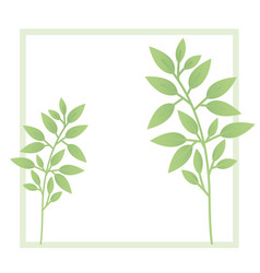 branch and leaf with frame isolated icon vector image