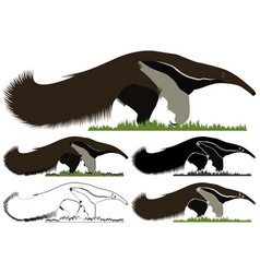 Giant anteater bandeira in front view vector