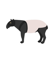 Malayan tapir isolated on white background vector