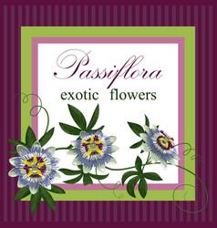 passiflora exotic postcard vector image