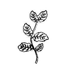 Figure nice plant ingredient to condiment of food vector