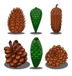 Set of fir cones vector image