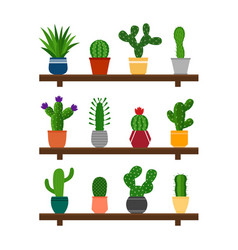collection cactuses in pots on shelf vector image