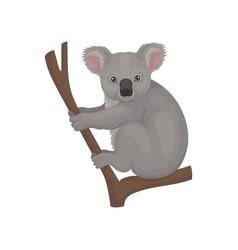 Cute gray koala sitting on tree branch australian vector