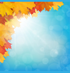 realistic maple leaves corner sun sky vector image
