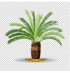 type of palm tree on transparent background vector image vector image