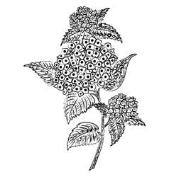 Doodle art flowers Zentangle hydrangea pattern vector image