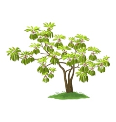 Exotic Green Plant vector image vector image