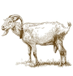 engraving big goat vector image vector image