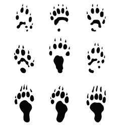 black footprints polecat vector image