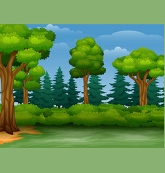 Cartoon of trees view in a forest vector