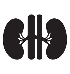 Kidney icon vector