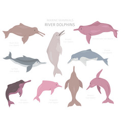 river dolphins set marine mammals collection vector image