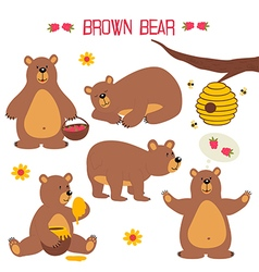 Set of isolated brown bear vector
