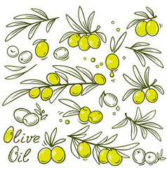 set of olive branch vector image