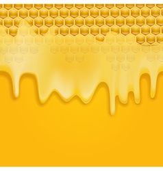 dripping honey vector image