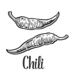 Chili vintage engraved for vector image vector image