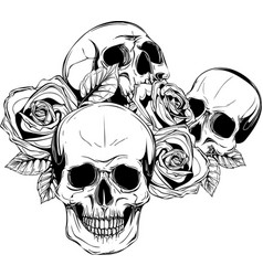 A human skulls with roses on white background vector