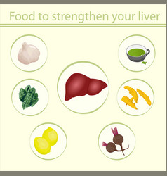 food to strengthen your liver vector image