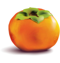 Fruit persimmon on white background vector