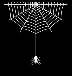 spider hanging on the cobweb thread vector image