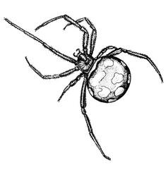 vintage engraving a spider vector image