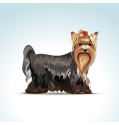Yorkshire terrier dog vector