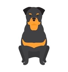 Black Labrador retriever dog domestic animal vector image