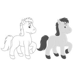 Foal vector image