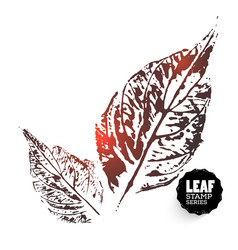 Design leafes vector