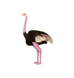 Detailed flat icon of ostrich side view vector