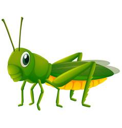 Green grasshopper on white background vector
