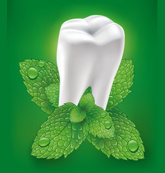 white tooth whitening toothpaste and fresh mint vector image