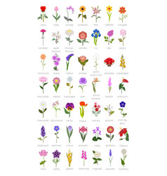 your garden guide top 50 most popular flowers vector image