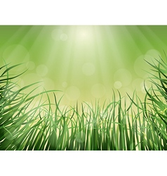 Grass rays and glare vector