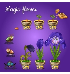 Stages of growing magic blue flower vector image vector image