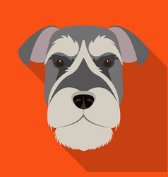 a breed of a dog a risen schnauzerrisen vector image