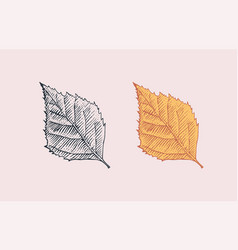 autumn leaves or herb rustic decorative birch vector image