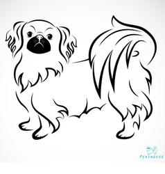 Dog Pekingese vector