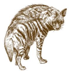 Engraving hyena vector