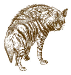 Engraving of hyena vector