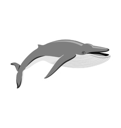 Black Whale Isolated on White Background vector image