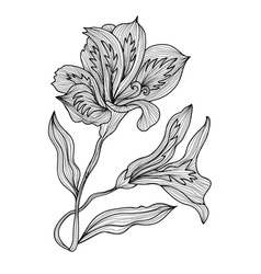Decorative lily flowers vector