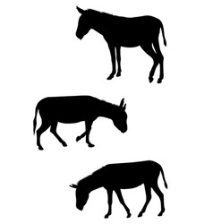 Donkeys silhouettes set vector
