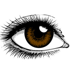 Eye on white background eyes art woman eye the vector
