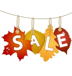 Hanging sale with autumn leaves vector image