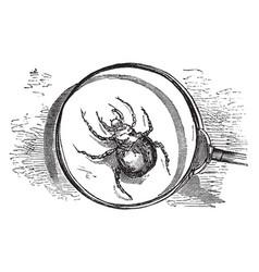 harvest mite vintage vector image