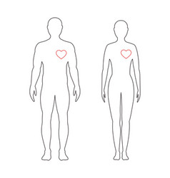heart of man linear man and woman in full growth vector image